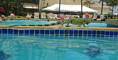2016-06-03 11.54.01 (WoodysWorldTV) Tags: travel tourism tropical sanjuan puertorico territory