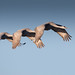 """Al Perry """"Flying by the seat of your pants"""" MPPGB Award"""