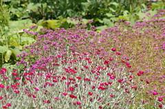 Flowers () Tags: minolta sony af 100300mm f4556 slta57 57