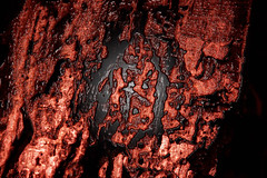"""Organic: Biohazard"" (-Mark Bean-) Tags: blood membrane mucus bleeding horror wound injury burn flesh sore open sci fi sy fy syfy scifi science fiction crust lava red molten phoenix scab abstract macro black two tone wet moist ooze bleed organic cut oozing mead skin muscle charred disgusting unpleasent horrific gross alien brain aliens rotting rotten"