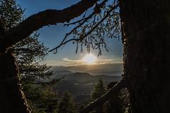 Vista sulle Dolomiti (www.massimonicoli.com) Tags: naturaleza sol del los italia tramonto foto natura alberto bosque cumple prado fotografia sole montaa puesta pino prato montagna todos dolomiti fotografi fotografa fotografas fotgrafos dolomitas boschi albeto requisitos