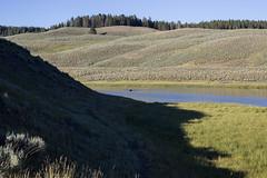 Bison Fording the river (SLC_Dan) Tags: bison americanbuffalo yellowstonenationalpark