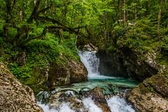 Slovenia / Slowenien: Lepena (CBrug) Tags: trees green water creek wow landscape waterfall wasser wasserfall outdoor bach slovenia slowenien grn landschaft bume bovec lepena