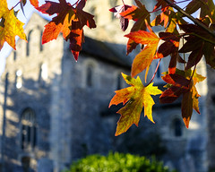 That Autumnal Sunday Feeling (Explored...briefly again!!) (Fourteenfoottiger) Tags: church sunday autumn autumnal leaves dof depthoffield building