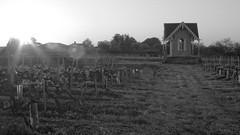 Clos du Notaire - Bourg sur Gironde (3) (JD Sans) Tags: vineyard vigne gironde m43 micro43 43
