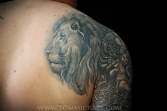 small frame 9x6 brett lion sleeve healed (Tommicrazy Tattoos) Tags: uk wild portrait tattoo manchester grey lion brett realistic shaded middleton animalcolour tommicrazy