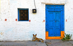 WALLS HAVE EARS, DOORS HAVE EYES, BUT BEWARE... THE DOGS HAVE TEETH TOO ! (GOPAN G. NAIR [ GOPS Photography ]) Tags: door dog wall photography guard gops gopan gopsorg gopangnair gopsphotography