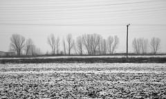 013_Doxato_2016 (michaelmelachrinidis) Tags: trees winter snow misty fog snowcovered