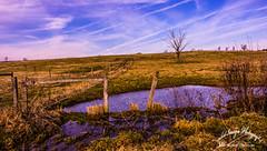hdfarm_ip (Orchid Images) Tags: water mud farm fields agriculture earlyspring fenceline navalacademy dairyfarm annearundel horizonfarm