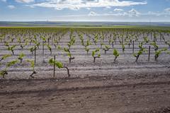 Leica Q - L1170120 (sswee38823) Tags: leica sky landscape countryside spain vines farm 28mm country farming q summilux jerezdelafrontera leicaq jerezdelafronteraspain leicaqtype116 summilux28mmf17asph