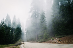 Into the Mystic (HikerDude24) Tags: road cloud mountain mountains nature clouds forest outdoors nationalpark nikon cloudy outdoor sequoia sequoianationalpark d5100