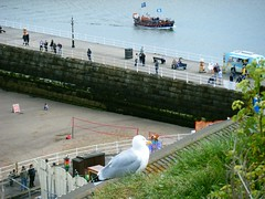 Whitby, North Yorkshire seagull, overlooking sea and lifeboat (rossendale2016) Tags: seafaring members crew captain boats flags playing court beachvolleyball attacking holidaymakers nuisance flying flight ball volley net seated deckchair chair deck sitting orange red yellow gull large big white devouring eating caught catching worm beak bird tourism tourist seaside water tide slates tiles roof jetty stone seller vendor van cream ice edge cliff feeding stood nest posing competition nets volleyball sand beach overlooking perched sat cliffs seagull pier lifeboat sea yorkshire north whitby