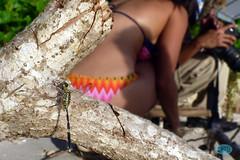 0816 P1020594 (JRmanNn) Tags: mike sarah dragonfly adrian guam tumon