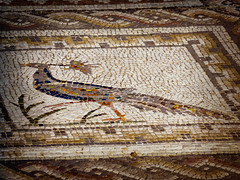 Peacock Underfoot (Colormaniac too) Tags: travel detail bird art archaeology closeup architecture spain ruins colorful floor roman mosaic peacock villa andalusia excavation italica hispania mosaicart flypapertextures
