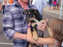 Tim's new pup, Stella (EllenJo) Tags: arizona mainstreet pentax az event blockparty mytown fridaynight streetparty verdevalley 2016 may27 smalltownlife clarkdalearizona 86324 ellenjo ellenjoroberts summerinaz may2016 pentaxqs1