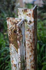 White & green (S's images) Tags: brown abstract rust white green