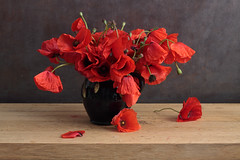 Memoria In Aeterna (panga_ua) Tags: flowers red stilllife art june composition canon spectacular artwork ceramics artistic availablelight ukraine poetic creation memory poppies jug imagination natalie presentation bouquet arrangement tabletop earlysummer bodegon naturemorte panga artisticphotography rivne naturamorta artphotography sharpfocus fieldflowers pastelbackground olegkaravaichuk woodentabletop  nataliepanga memoriainaeterna