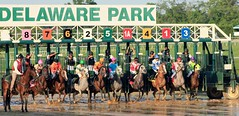 And they're off! (susanmbarlow) Tags: horse racetrack photograph horseracing delaware arabian arabianhorse racehorse equine equus horserace delawarepark equidae startinggate equusferuscaballus arabianracing delparkracing