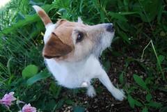 Didi (1) (Danielle Carrier) Tags: dog pet pets dogs didi