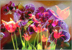 orchids and tulips (Sunnyvaledave) Tags: abstract tulips