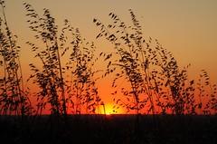 Coucher de soleil - Clermont le Fort (31) (FloLfp) Tags: shadow sky france yellow natural pentax fort ombre ciel le toulouse été 31 francia clermont 法國 k50