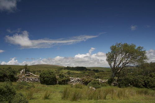 Dartmoor Summer
