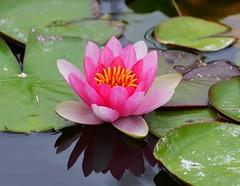 NZA-05 - 2015-02-26 - DSC_7637 (bix02138) Tags: newzealand flora northisland napier february26 2015 napiernewzealand aotearoanewzealand clivesquare day5newzealandaustralia2015