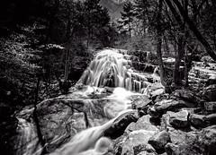 The Falls at Roaring Run (B&W) (Michael Kline) Tags: forest waterfall va april 2015 roaringrun