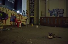 . (Aline Belfort) Tags: brazil cinema abandoned brasil cat canon kino mark centro sala cine sp ii kiko 5d paulo sao decadence marrocos grafite abandonado 2015 ocupacao dinucci climachauska
