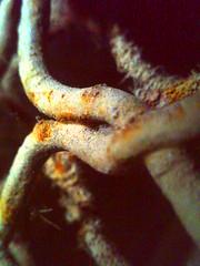 suciedad harinezumi (Pepe Alfonso) Tags: dirt hari schmutz saleté suciedad harinezumi sporcizia harinezumifotografia harinemi2