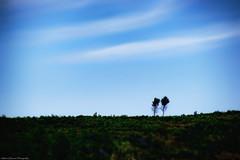 Loneliness (Mario Ottaviani Photography) Tags: trees nature alberi solitude loneliness minolta sony tokina lonely alpha solitary slt solitudine solitari a99 sonyalpha marioottaviani