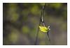 Leaf with echoes (leo.roos) Tags: darosa leoroos dayprime day113 dayprime2015 dyxum challenge prime primes lens lenses lenzen brandpuntsafstand focallength fl a7s bauschandlombtessar1c11345 enlarginglens enlarger vergrotingslens vergroter solleveld leaf leaves blad bladeren bokeh enlargerlens vergroterlens tessar