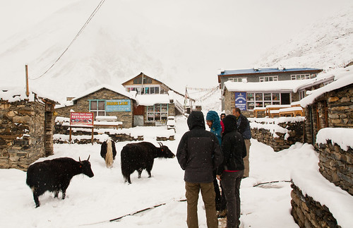 Snow in Yak Kharka