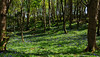 Spring in Courtmacsherry (mishko2007) Tags: ireland bluebells courtmacsherry 1224mmf4