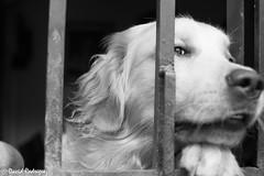 Bongo in jail (david_rodrguez2000) Tags: pet raw venezuela bongo doggie mascota sanantoniodelosaltos