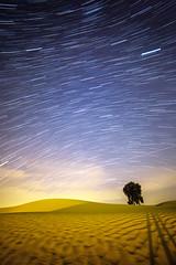 Van Gogh's desert (D_Snapper) Tags: sky tree night canon skyscape stars landscape sand dubai desert dunes uae 5d startrails woestijn 14mm samyang 5d3 5diii 14mmt31