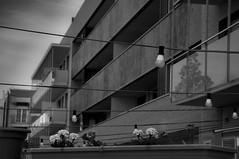 Lneas 210/365 (Susana RC) Tags: blancoynegro bn 365 cardedeu monocromtico proyecto365