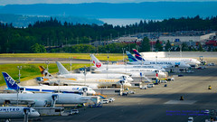 ALL THOSE 787s IN FACTORY TEST... (AvgeekJoe) Tags: plane airplane other nikon aircraft aviation dslr jetliner 787 jetliners painefield kpae dreamliner 7878 boeing787 7879 boeing787dreamliner 787dreamliner d5300 boeing7878 boeing7878dreamliner boeing7879 boeing7879dreamliner nikond5300