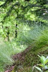 Colours of green (tillwe) Tags: tree green blackforest tillwe allerheiligen oppenau 201605 norschwarzwald hochzeitsfeierjd