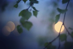 Tog en promenad igr kvll vid midnatt p jakt efter ljus. Och hittade det omsvep av dimma. (magdalenasandberg) Tags: square sierra squareformat ljus iphoneography fotosondag instagramapp uploaded:by=instagram fs160522