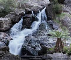 St Columba Falls Reserve @ Pyengana (myshutterworld) Tags: st landscape waterfall under smooth reserve australia down falls tasmania tassie hdr silky columba pyengana silkysmoothwatereffects