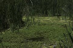 ForestPark_SAF7530 (sara97) Tags: park nature outdoors missouri saintlouis forestpark citypark urbanpark photobysaraannefinke copyright2016saraannefinke
