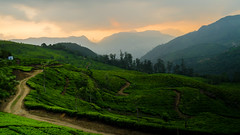 Sunset over the Tea Estate (rai.vikramaditya) Tags: sunset india beautiful rural cloudy dusk path scenic calm hills greenery serene teaestate