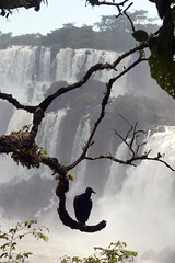 Iguazu Falls (sophs123.) Tags: travel summer brazil bird nature argentina animals silhouette america canon waterfall do wildlife south falls jungle latinoamerica cataratas iguazu foz iguacu canon400d