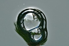 another bubble............... (Suzie Noble) Tags: water garden bubbles waterbutt strathglass struy