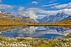 Zermatt , Switzerland. The Schwarzsee at summer time . Fix You .No.9497. (Izakigur) Tags: flowers summer reflection nature water switzerland wasser europe flickr coldplay feel zermatt nikkor ch dieschweiz musictomyeyes suizo fixyou myswitzerland climbeverymountain nikond700 nikkor2470f28 izakigur