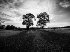 Black & White Country (Raphal Melloul) Tags: sunset blackandwhite white 3 black france tree beautiful field contrast photography photo photographer photos country ground aerial phantom raphael campagne pp advanced picoftheday photographe drone frnace photographies melloul dji calvinet bestoftheday