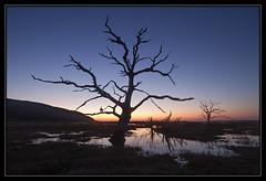 Porlock Marsh (Explored) (RattyBoots) Tags: sunset canon flood deadtree 7d marsh hightide porlock canon1022 april2015