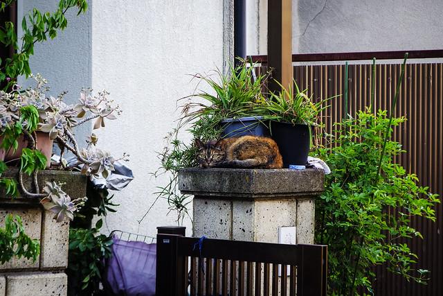 Today's Cat@2015-04-29