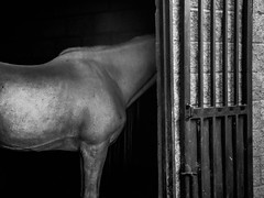 Horses #3 (Luis Angel Trevor) Tags: bw horse nature caballo finepix contraste fujifilm alto s2950